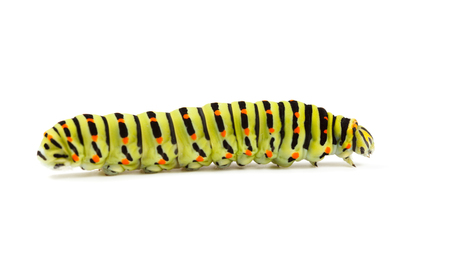 vermin: Side low angle view of vermin caterpillar isolated on white