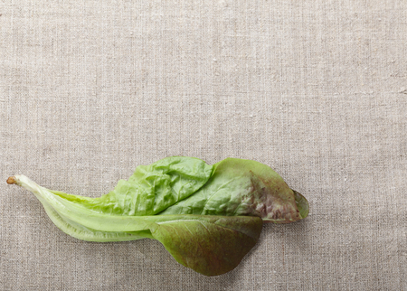 lactuca sativa: From above macro of lettuce (Lactuca sativa) bunch over burlap background with copyspace