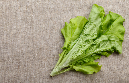 lactuca sativa: Top view of lettuce (Lactuca sativa) bunch on sackcloth background with copyspace