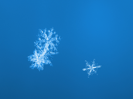 snowflake snow: Macro of three natural snow flakes over blue background
