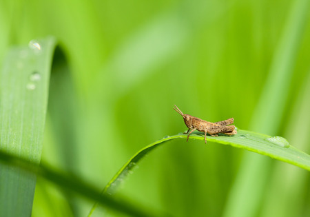 Side-view on small grasshopper sitting on leaf after rain over meadow background