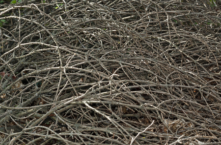Pile of many fallen twigs and branches background, horizontal Stock Photo
