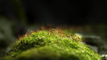 Macro low point of view of mossy hummock over dark forest background 스톡 콘텐츠
