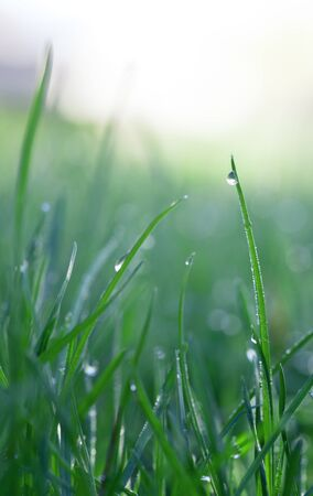 Macro low point of view on grass blades and dew drops, vertical Stock Photo