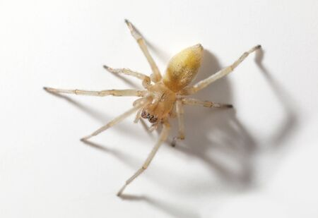 Macro view from above of spider over white background