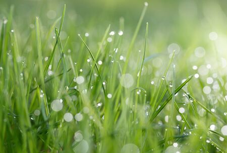 Green grass on meadow - macro low point of view