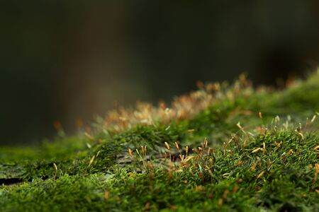Macro of mossy hummock on forest floor over dark background