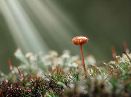 Beams of sunlight on forest floor with growing lichen, moss and toadstool with water drop on cap after the rain