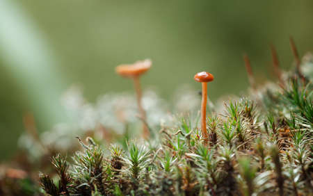 Macro of forest floor at sunny day over dark forest background – toadstools, lichen and moss.