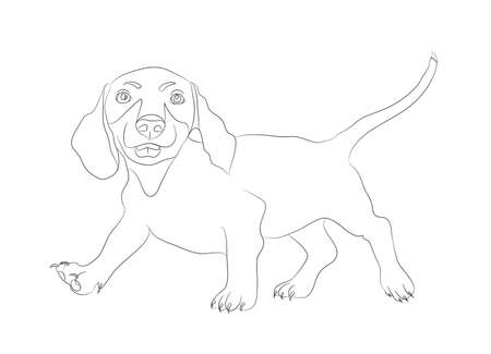 dachshund stands dog lines, vector, white background