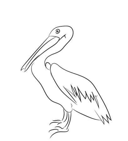 pelican graphic line vector illustration