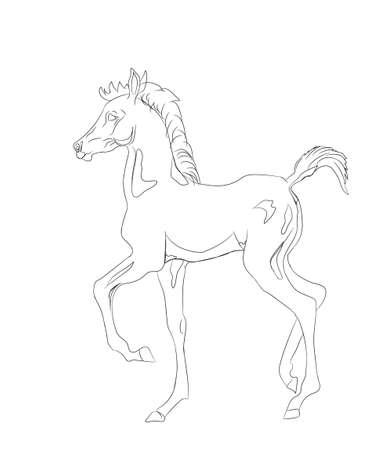 horse lines vector illustration Illustration