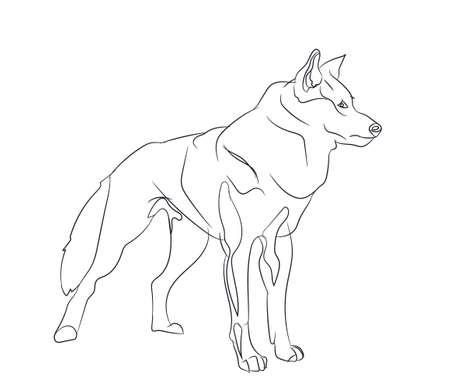 dog stands vector illustration Illustration