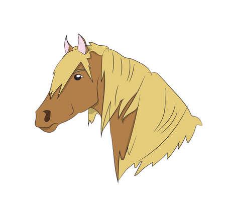 horse portrait, vector, white background Vektorgrafik