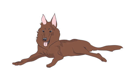dog lies vector illustration