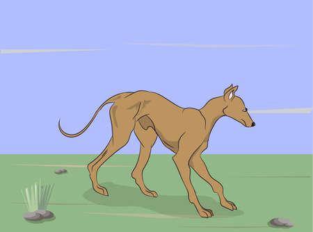 dog running vector illustration Vettoriali