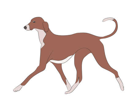 dog running color vector illustration Vectores
