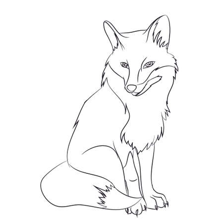 fox sitting vector illustration