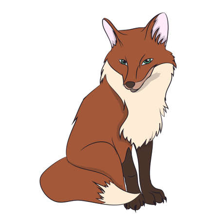 fox  sitting vector illustration Illustration