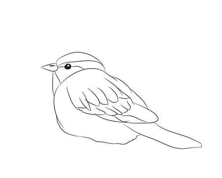 sparrow lines vector illustration