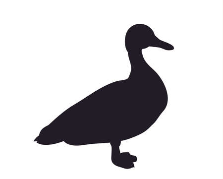 duck silhouette vector illustration 向量圖像