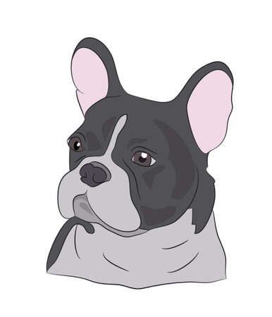French bulldog looking in the side vector illustration Illustration