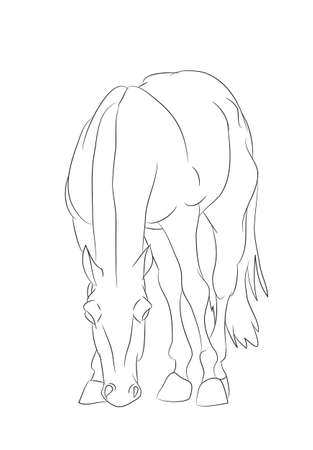 vector illustration horse, lines, vector, white background
