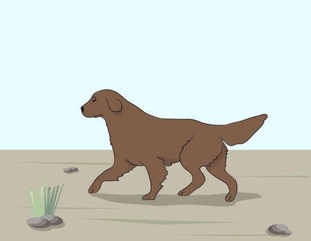 vector illustration dog running, color, vector, outdoors Illustration