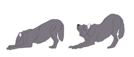 gray wolf, step-by-step movement, vector, white background