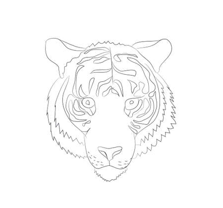 portrait of tiger lines, vector, white background