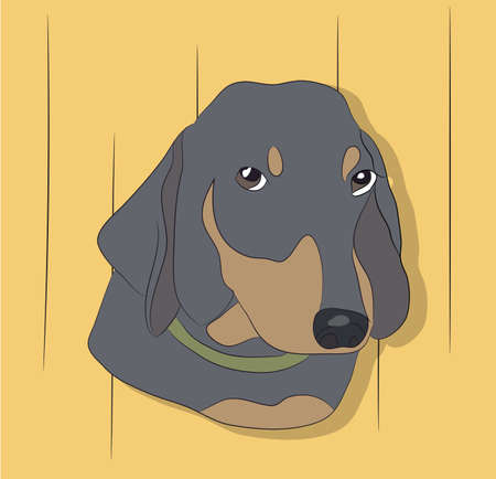 portrait of a dog dachshund on the wall background vector illustration