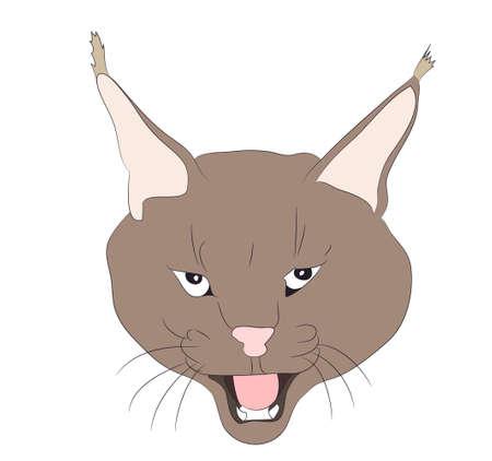 portrait of a lynx drawing vector illustration Illustration