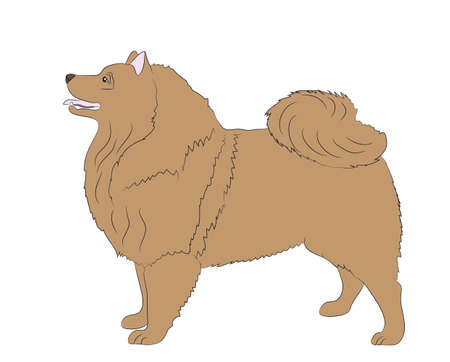 dog is a brown vector, White background