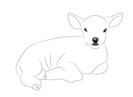 lamb lies drawing lines, vector, white background