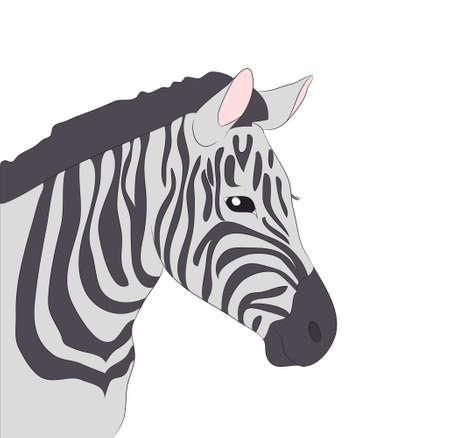 portrait of zebra drawing color vector illustration
