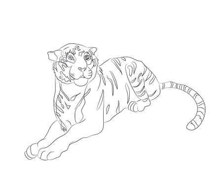 vector illustration of a tiger that lies, drawing by lines, vector, white background