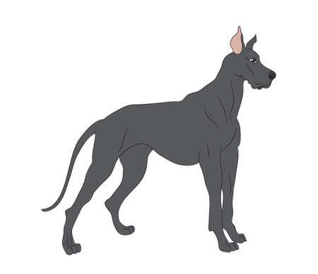 vector illustration dog is standing, vector, White background Illustration