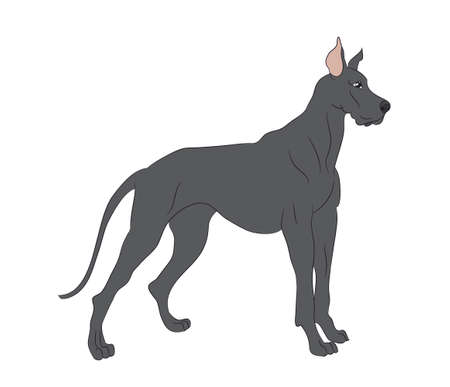 vector illustration dog is standing, vector, White background Ilustração