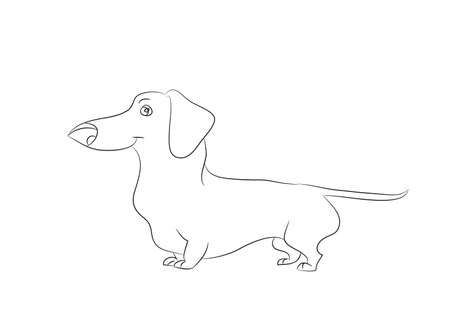 Vector illustration of a cartoon dachshund that stands drawing with lines, white background.