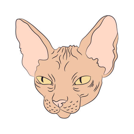 cat portrait, vector, white background, color drawing Иллюстрация