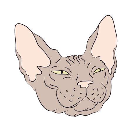cat portrait, vector, white background, color drawing Illustration