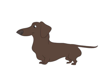 Vector illustration of a cartoon dachshund that stands, drawing color, white background.