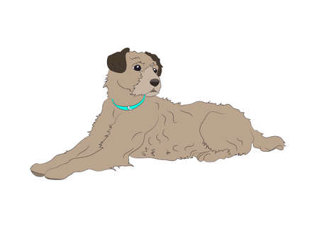 dog lies, color drawing, vector, white background