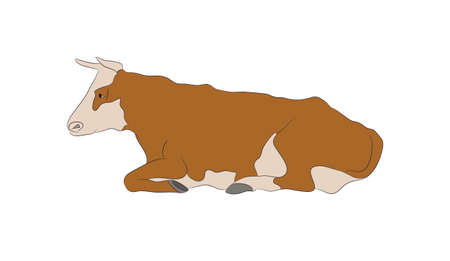 Vector illustration of a cow that lies, drawing color, vector, white background