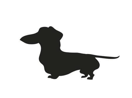 Vector illustration of a cartoon dachshund that stands, silhouette drawing, white background. Illustration