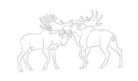 Ilustración vectorial de un ciervo peleando, dibujo de líneas, vector, fondo blanco.