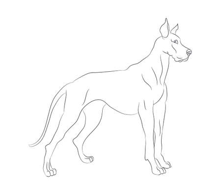 dog stands lines, vector, white background, dog stands Archivio Fotografico - 129066995