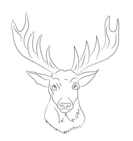 deer portrait drawing lines, vector, white background