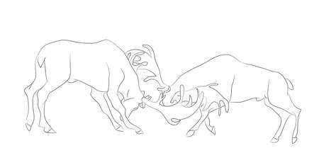 vector illustration of a deer fighting, drawing by lines, vector, white background Иллюстрация