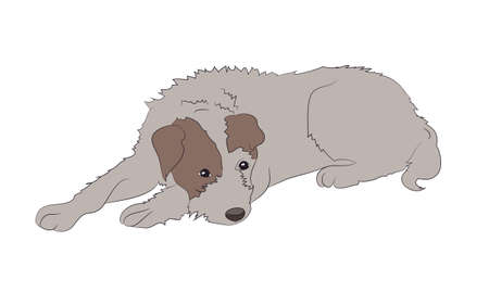 dog lies, color drawing, vector, white background Archivio Fotografico - 129067405